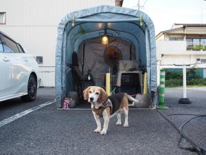 Zuhause in der Luxus-Hundehütte. (c) Sonja Blaschke
