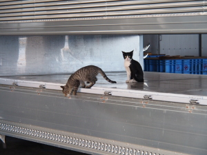 Verspielte Katzen am Fischmarkt. (c) Sonja Blaschke